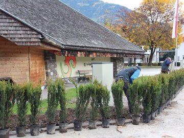 Neubepflanzung